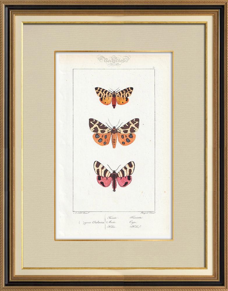 Stampe Antiche & Disegni | Farfalle dall'Europa - Chelonia | Stampa calcografica | 1834