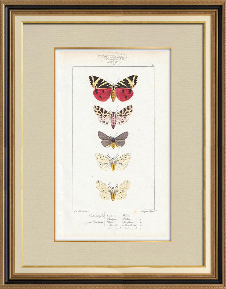 Stampe Antiche & Disegni   Farfalle dall'Europa - Callimorphe - Chelonia   Stampa calcografica   1834