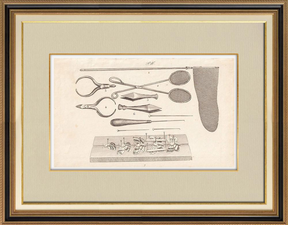 Grabados & Dibujos Antiguos | Material para Lepidopterophile | Grabado en talla dulce | 1834
