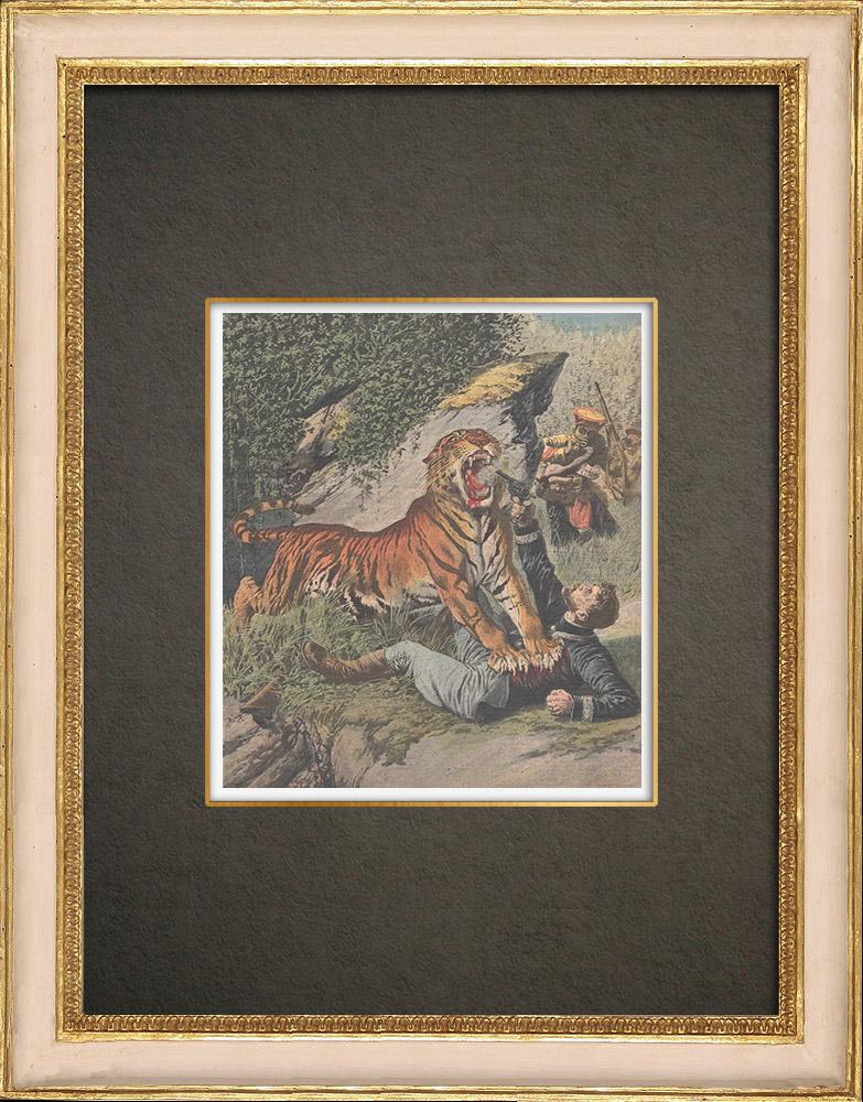 Stampe Antiche & Disegni   Un uomo attaccato da una tigre in Congo - 1909   Incisione xilografica   1909