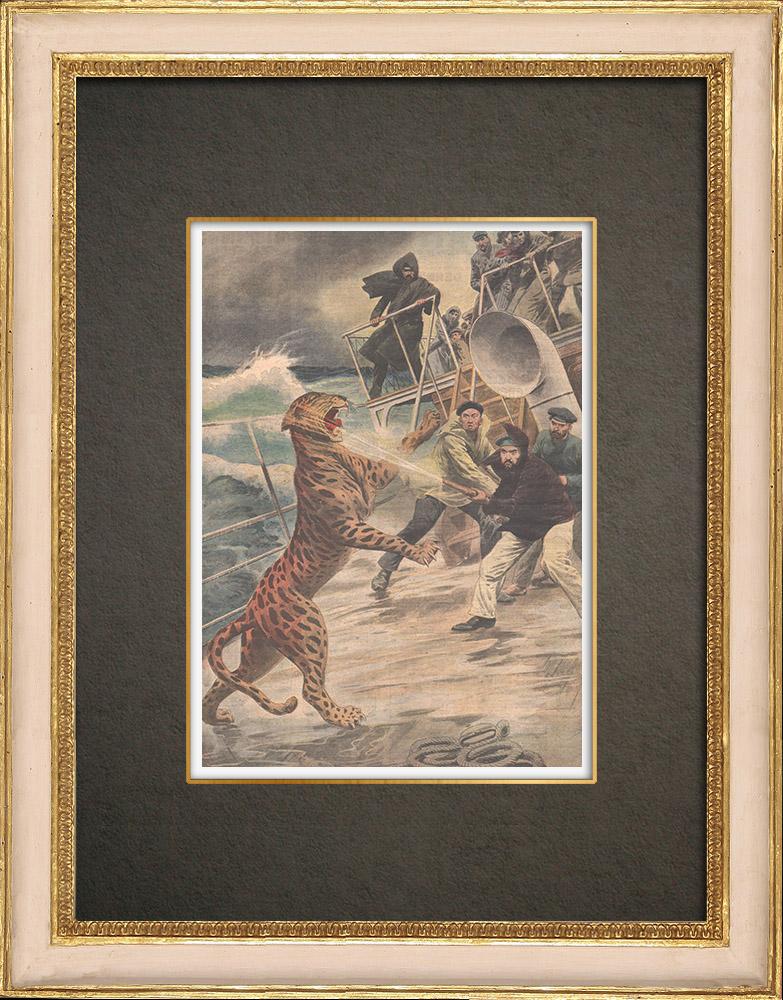Stampe Antiche & Disegni | Un giaguaro in libertà sul ponte di una nave, sbarca a New York - 1909 | Incisione xilografica | 1909