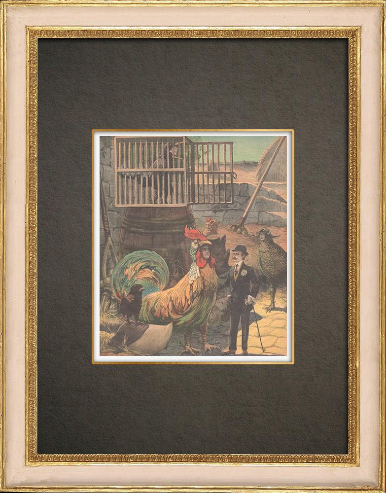 Antika Tryck & Ritningar | Chantecler - Edmond Rostand - Théâtre de la Porte-Saint-Martin - Paris - 1910 | Träsnitt | 1910