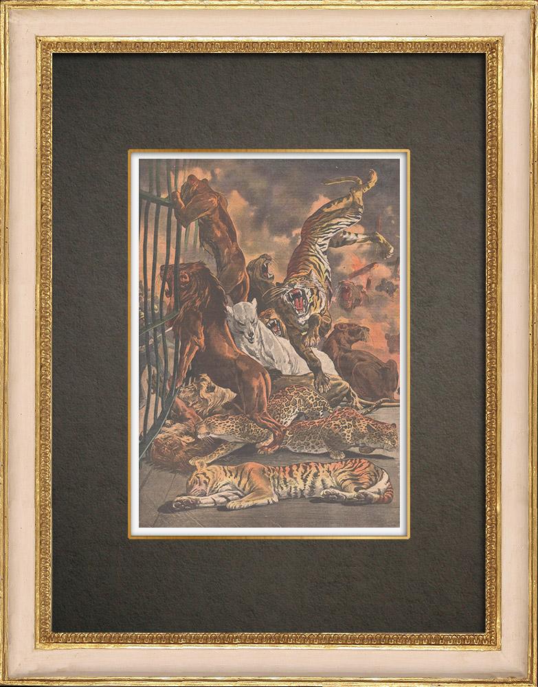 Stampe Antiche & Disegni | Morte degli animali della menagerie nel fuoco alla Esposizione di Bruxelles - Belgio - 1910 | Incisione xilografica | 1910