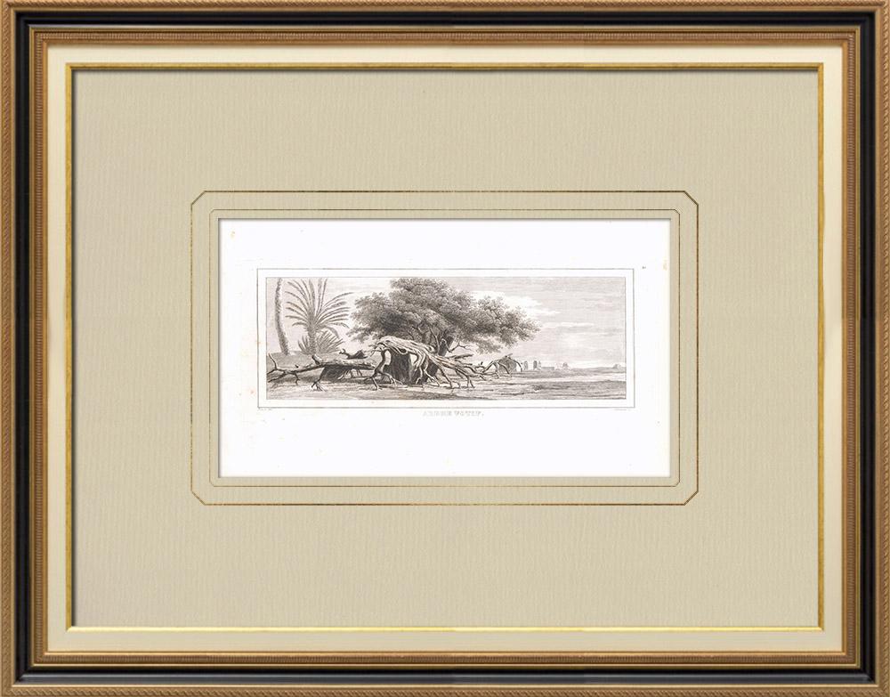 Stare Grafiki & Rysunki | Drzewo Wotywne (Egipt) | Miedzioryt | 1830
