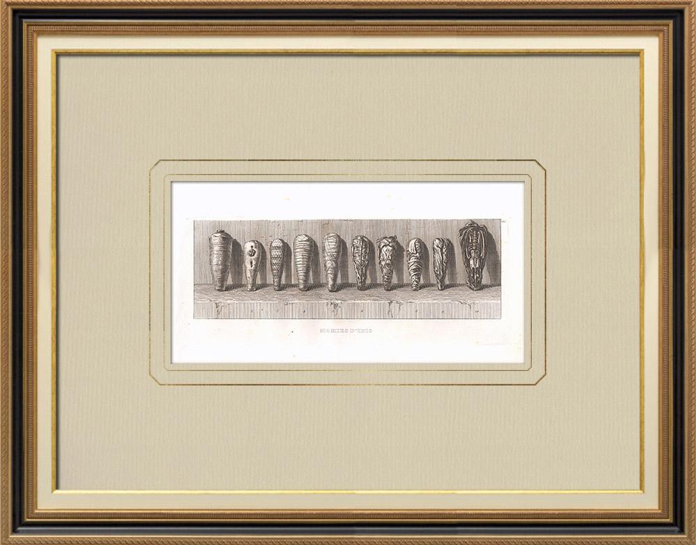 Stare Grafiki & Rysunki | Zmumifikowany Ibis (Egipt) | Miedzioryt | 1830