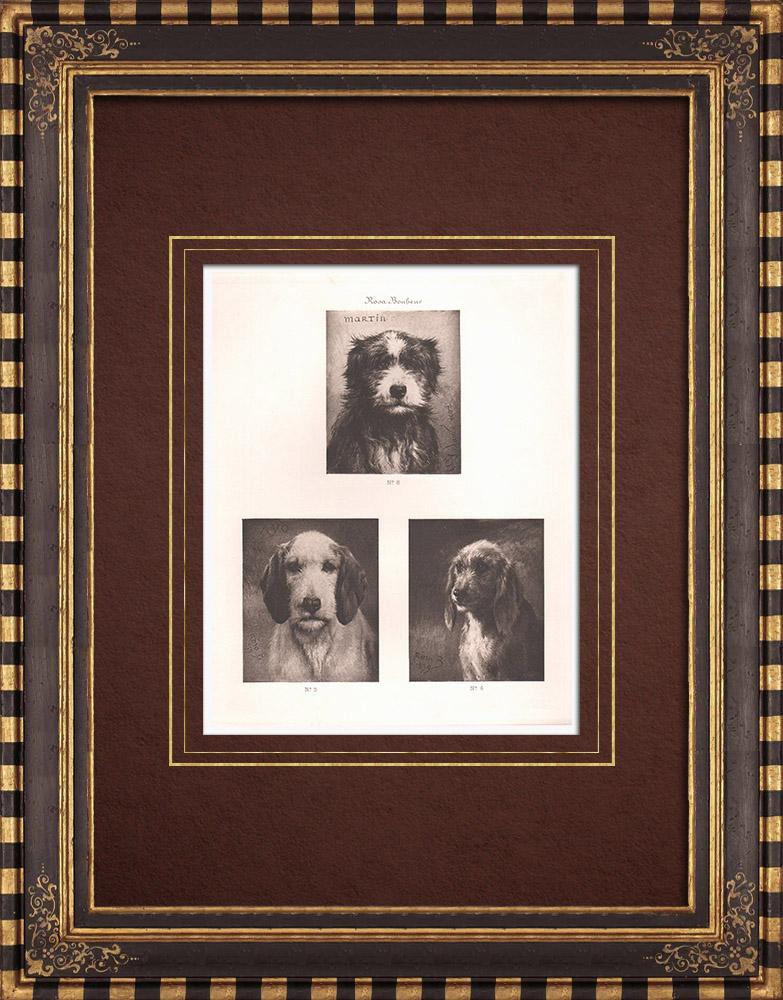 Gravures Anciennes & Dessins   Têtes de chiens (Rosa Bonheur)   Héliogravure   1890