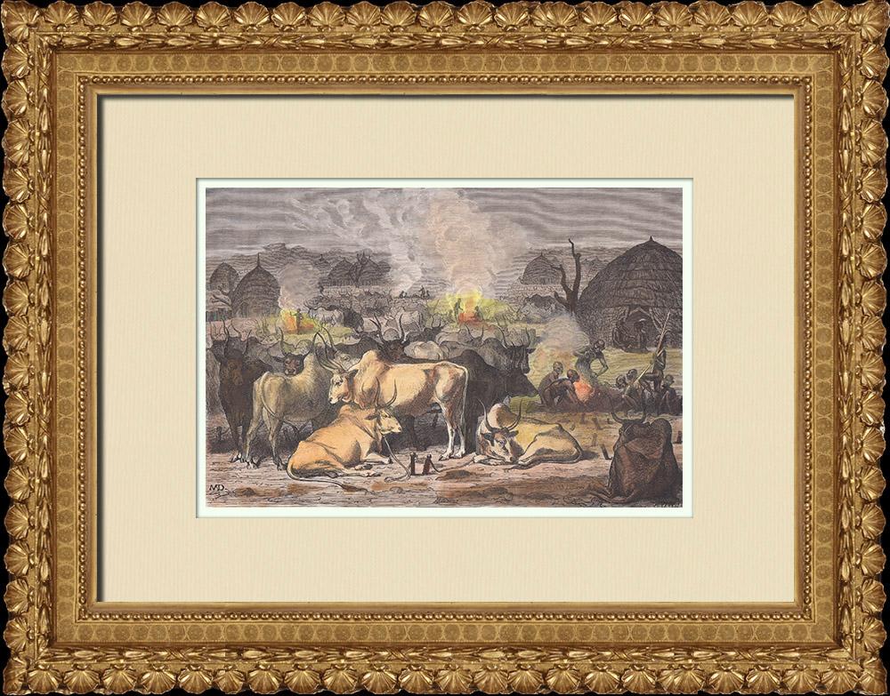 Gravures Anciennes & Dessins | Peuple Dinka - Ethnie - Nil - Agriculture - Élevage (Soudan du Sud) | Gravure sur bois | 1874