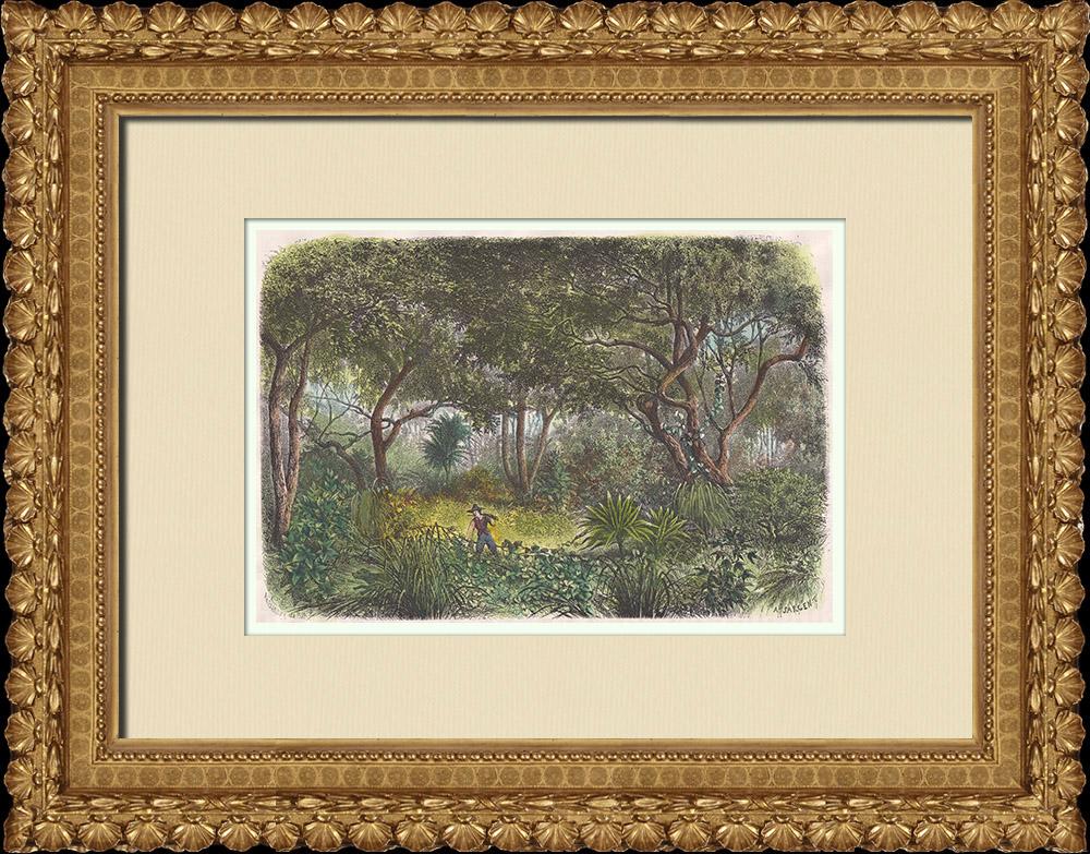 Gravures Anciennes & Dessins | Forêt de la région du Nil Supérieur (Soudan du Sud) | Gravure sur bois | 1874