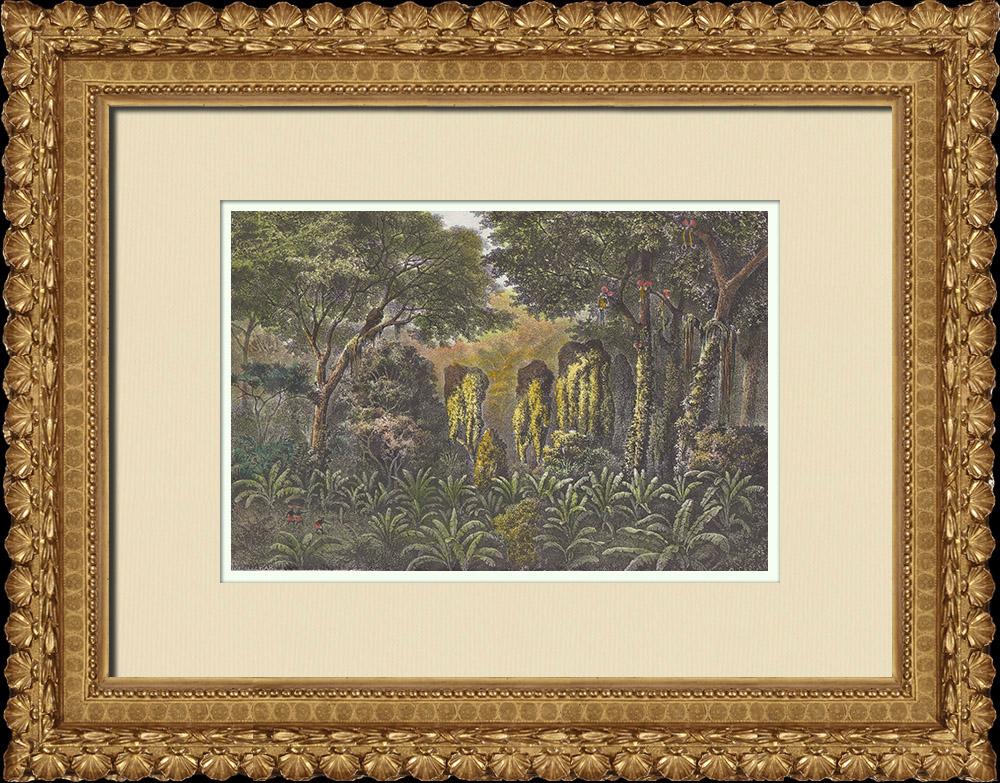 Gravures Anciennes & Dessins | Paysage près de la rivière Kibali - Forêt galerie (Afrique Centrale)  | Gravure sur bois | 1874